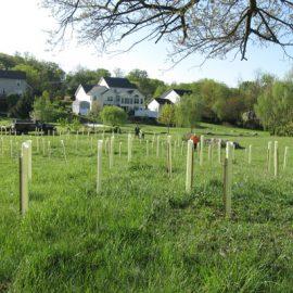 Washington County Highway Department employees planted over 600 tree seedlings