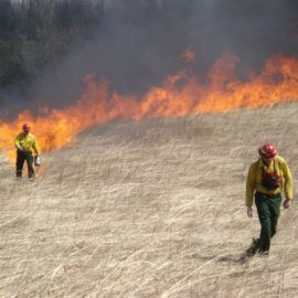 Controlled native grass burning